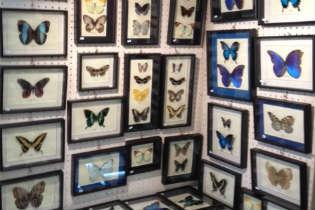 Rio Butterflies - Sara Figliomeni